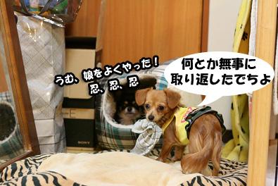 2007 10 27 わんママ家 111blogのコピー