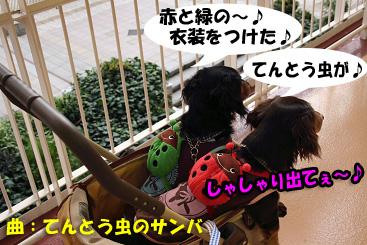 2007 10 31 ブロッサム&鶴見緑地 069blogのコピー_edited-1