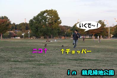 2007 10 31 ブロッサム&鶴見緑地 123blogのコピー