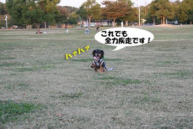 2007 10 31 ブロッサム&鶴見緑地 131blogのコピー