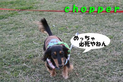 2007 10 31 ブロッサム&鶴見緑地 162blogのコピー
