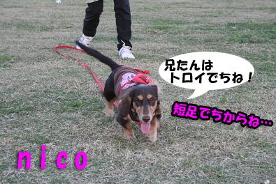 2007 10 31 ブロッサム&鶴見緑地 163blogのコピー