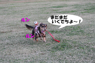 2007 10 31 ブロッサム&鶴見緑地 170blogのコピー