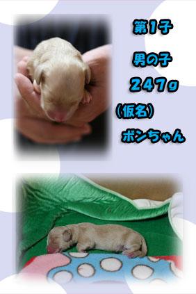 2007 11 11 アムール出産 b07のコピー