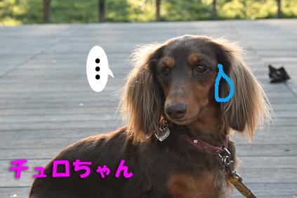 2007 11 03 箕面オフ会 187b09のコピー