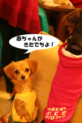 2007 11 23 わんママ家&凛ちゃん 078b04のコピー