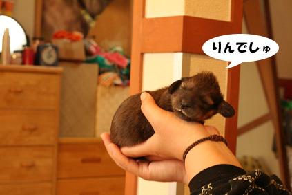 2007 11 23 わんママ家&凛ちゃん 051b02のコピー