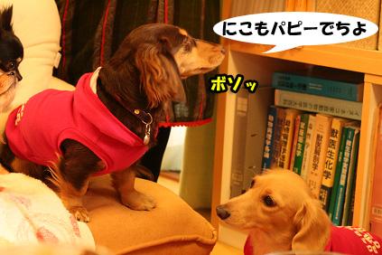 2007 11 23 わんママ家&凛ちゃん 059b06のコピー