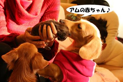 2007 11 23 わんママ家&凛ちゃん 066b03のコピー