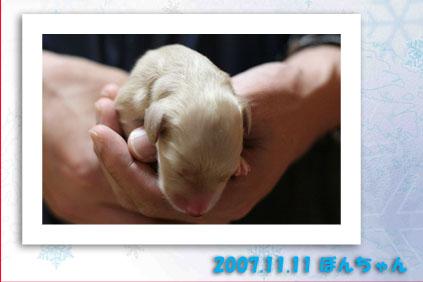 2007 11 11 アムール出産 104b12のコピー