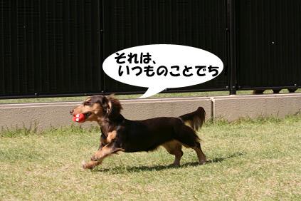 2007 10 29 お庭にて 060blog02のコピー