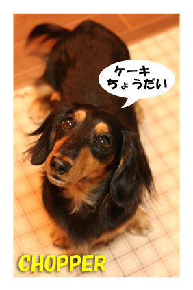 2007 11 28 ikko誕生日 129blog02のコピー