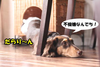 2007 12 05 ニコとチョッパー 031blog01のコピー