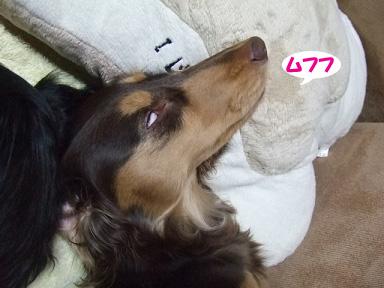 2008 02 04 ひっさん家族 042blog04のコピー