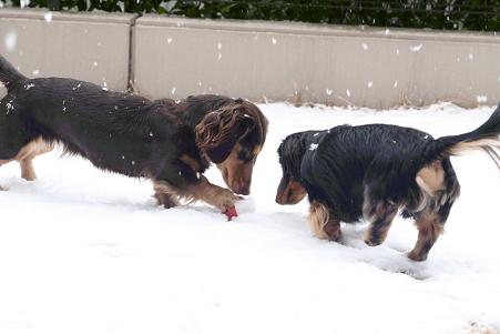 2008 02 09 雪遊び blog01