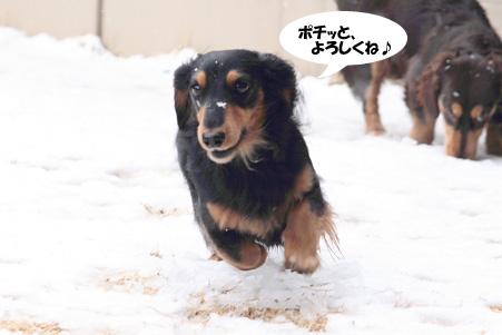 2008 02 09 雪遊び blog05のコピー