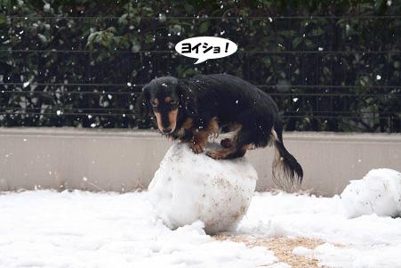 2008 02 09 雪遊び blog07のコピー