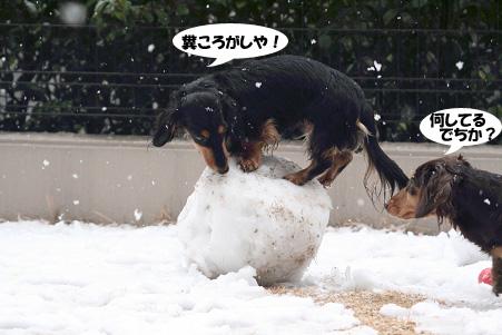 2008 02 09 雪遊び blog08のコピー