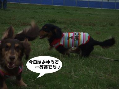 2008 04 19 海ふれ blog04のコピー