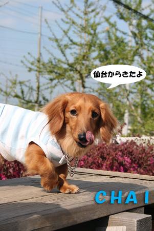 2008 04 20 吹田オフ会 blog21のコピー