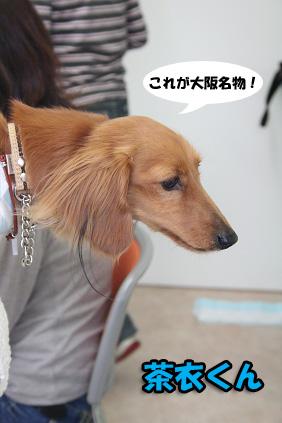 2008 04 20 吹田オフ会 blog34のコピー