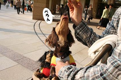 2008 04 27 難波の宮&パークス blog12のコピー