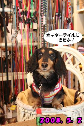 2008 05 02 カフェオッターテイル blog02のコピー