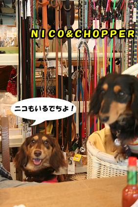 2008 05 02 カフェオッターテイル blog03のコピー