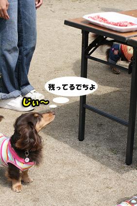 2008 05 11 淡路島オフ会 blog13のコピー