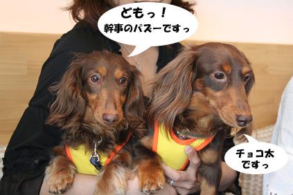 2008 05 17 ダックス友の会オフ blog01のコピー