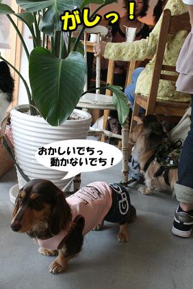 2008 05 17 ダックス友の会オフ blog02のコピー