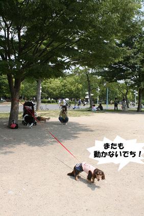 2008 05 17 ダックス友の会オフ blog10のコピー