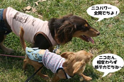 2008 05 17 ダックス友の会オフ blog03のコピー