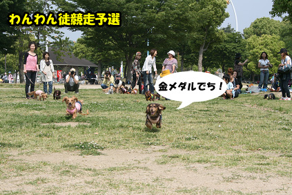 2008 05 17 ダックス友の会オフ blog04のコピー