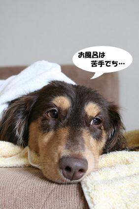 2008 05 18 キレイキレイ blog03のコピー