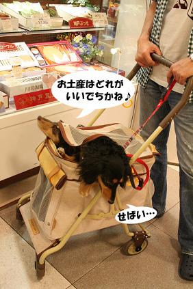 2008 05 25 りんくうアウトレット blog10のコピー