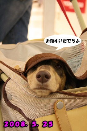 2008 05 25 りんくうアウトレット blog12のコピー
