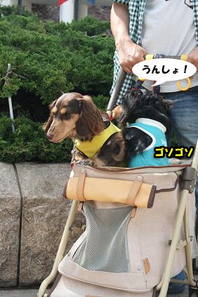 2008 05 25 りんくうアウトレット blog15のコピー