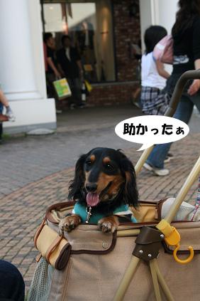 2008 05 25 りんくうアウトレット blog06のコピー