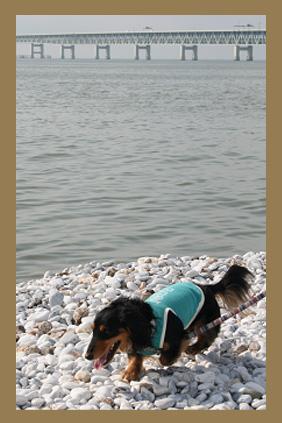 2008 05 25 りんくうアウトレット blog04のコピー