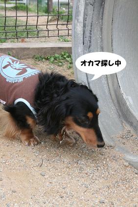 2008 06 01 アースコート blog08のコピー
