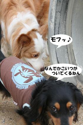 2008 06 01 アースコート blog09のコピー