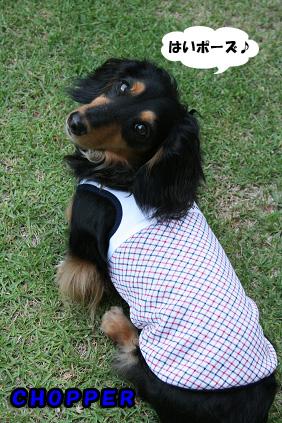 2008 06 12 お庭で撮影 blog05のコピー