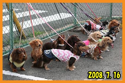 2008 07 16 チノフィロオフ会 blog17のコピー