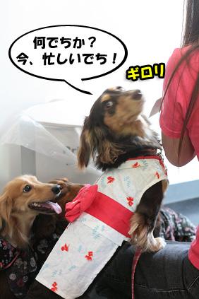 2008 07 20 浴衣オフ会 blog06のコピー