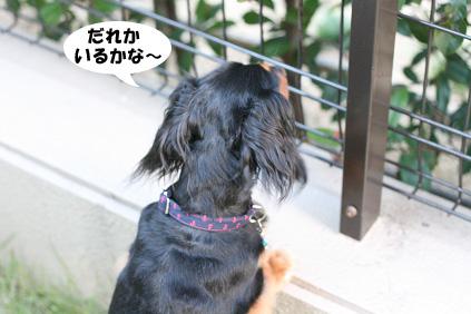 2008 07 19 お家で撮影会 blog06のコピー