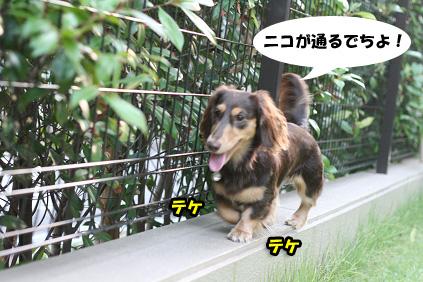 2008 07 19 お家で撮影会 blog07のコピー