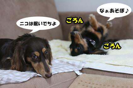 2008 07 29 チョロお預かり日記 blog02のコピー