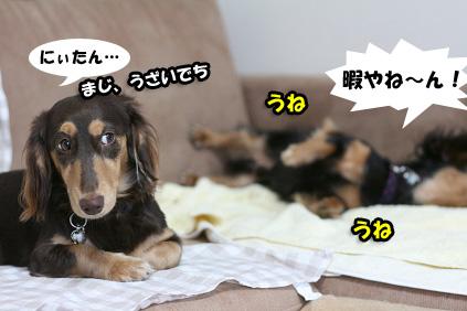 2008 07 29 チョロお預かり日記 blog01のコピー