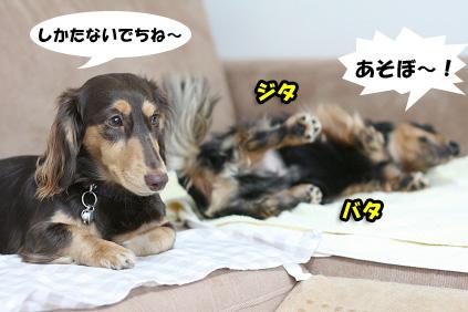 2008 07 29 チョロお預かり日記 blog03のコピー